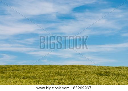 Meadow Wheat Field And Cloudy Sky