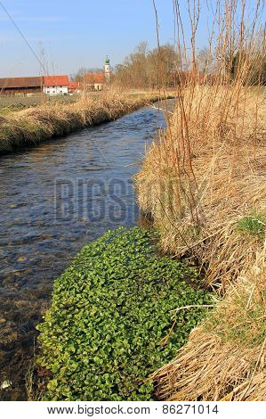 Fresh Watercress In A Brook