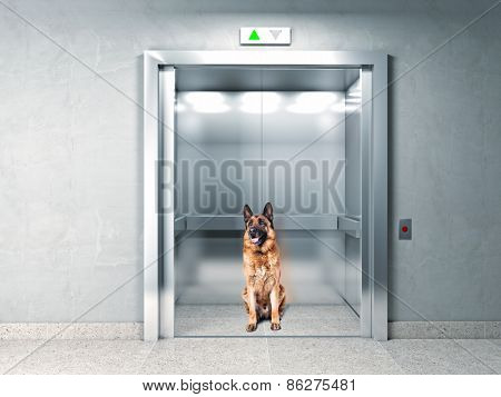 classic elevator and german shepherd