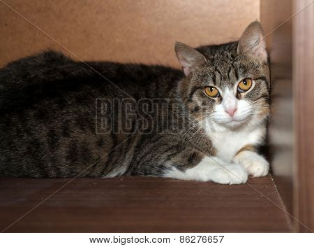 Striped And White Cat Lying On Shelf