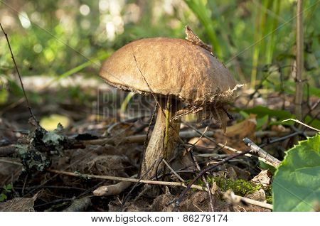 Beautiful Mushroom At The Forest.