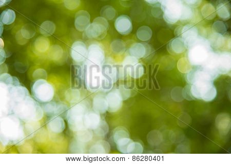 Bokeh Blur From Natural Tree