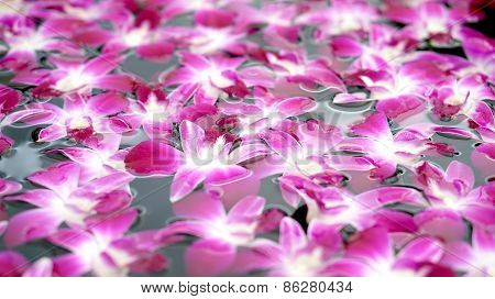Purple Orchid Floating