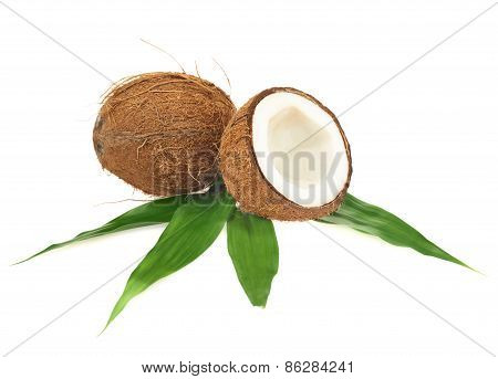 Coconut fruits over the leaves