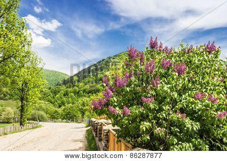 Carpathians. Road In Mountains