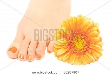 beautiful orange manicured nails with gerbera