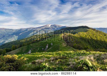 Carpathian Spring Landscape