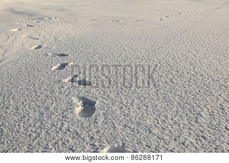 Human Footsteps On Snow