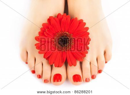 beautiful red manicured nails with gerbera