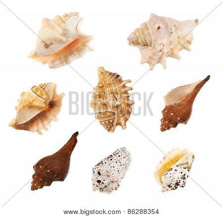 Set of multiple sea shells isolated