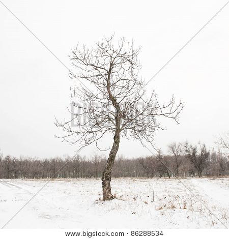 Bare Tree In Snow