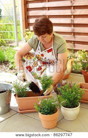 Elderly woman planting flowers and herbs