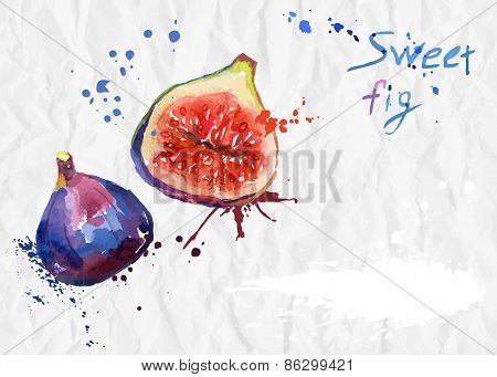 Watercolor illustration of figs.