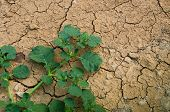 picture of survival  - The last plants survival in the dryness land - JPG