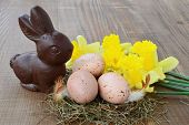 stock photo of nest-egg  - Easter background chocolate bunny spotted eggs in nest daffodils on wooden background - JPG