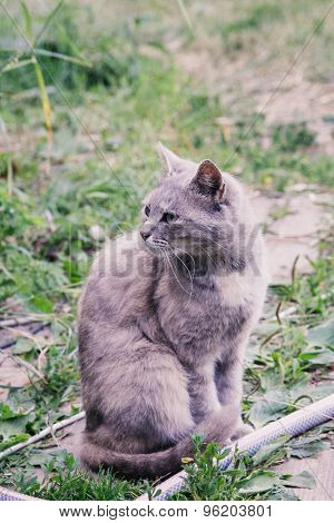 gray cat outdoor