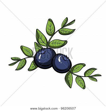 BlueberryVector