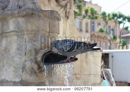 Pigeons Drinking Water From The Water Fountain