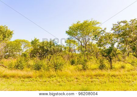 Trees In Zambia