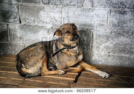 Dog Inside Cage In Shelter