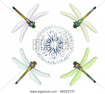 Dragonfly with flower