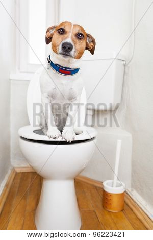 Dog On Toilet Seat