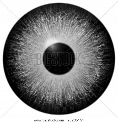 Isolated Grey Eye Illustration