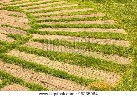 Pathway with natural green grass