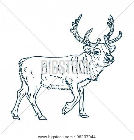 Reindeer vector illustration