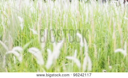 Flowers, Grass, Obviously Not In The Field, Grass, Beautifu