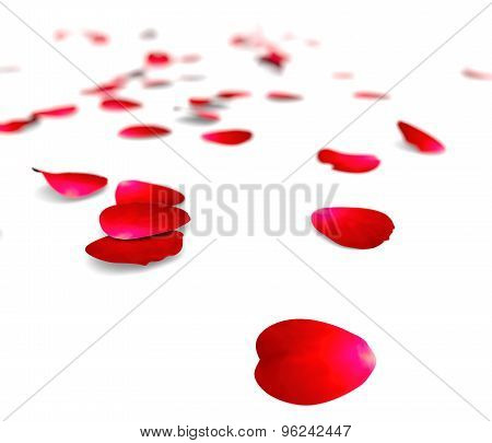 Petals Of Roses On A Floor