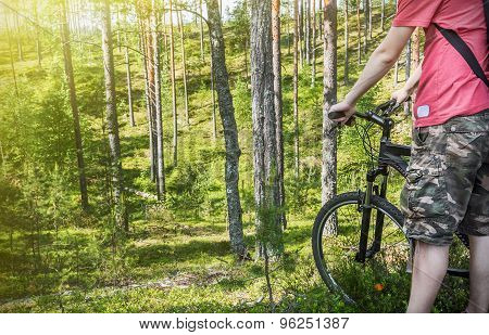 Extreme Cyclist On The Background Of Pine Forest