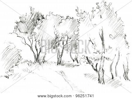 grove of deciduous trees
