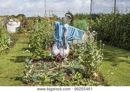 Scarecrow Guarding Allotment Plot
