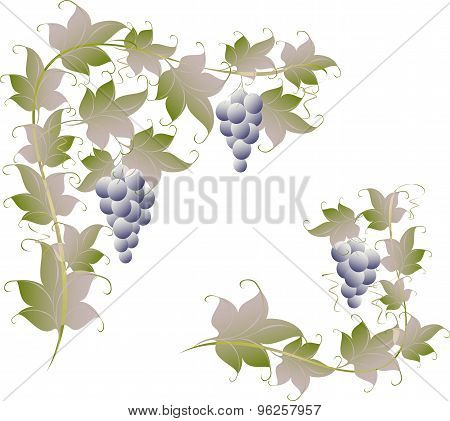 Pattern of vine grapes for page decoration. EPS10 vector illustration