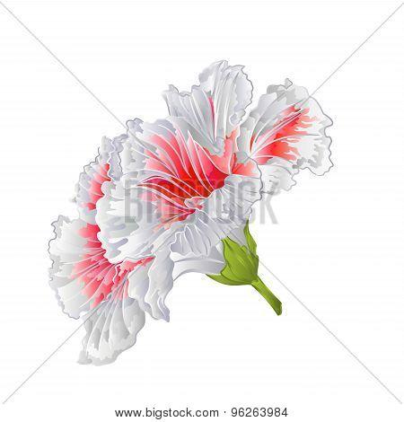 Flower White Hibiscus  Vector