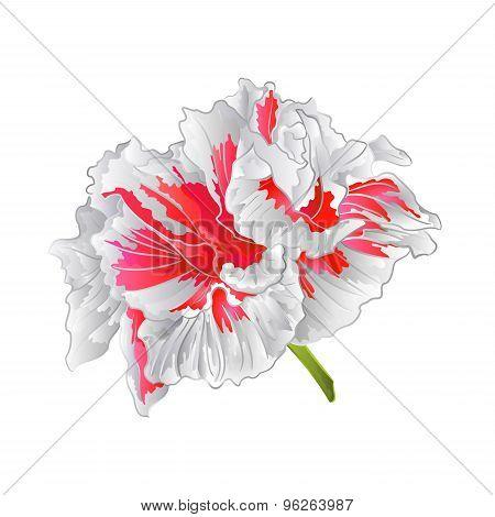 White Hibiscus Isolated Vector