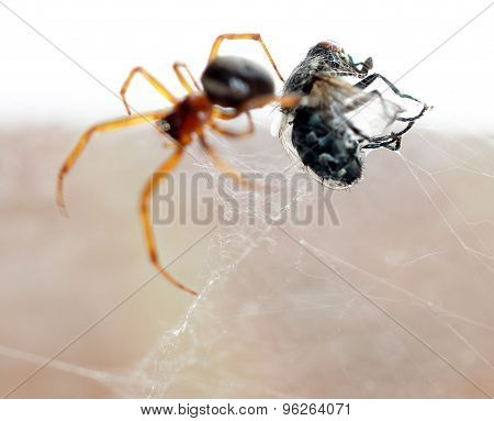 Spider killing it's prey