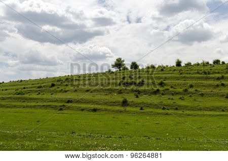 Background of field with grass, bush and trees