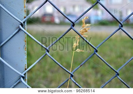 Fence Wire