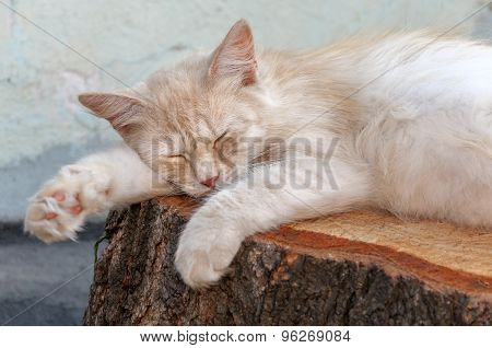 The Cat Is Sleeping On A Stump Of A Tree