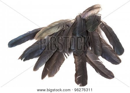Pile Of Feathers In Varying Shades Of Grey