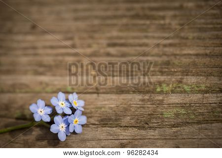 Forgetmenot Flowers On A Wooden Background