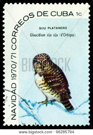 Vintage  Postage Stamp.  Bird  Cuban Pygmy Owl.