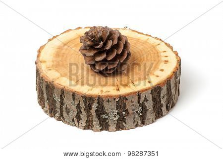 cedar cone on wood slice, isolated on white