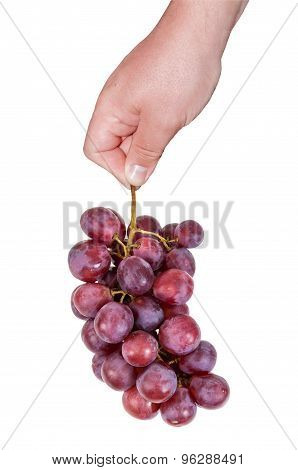 Hand Holding Bunch Of Red Grapes