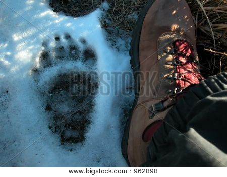 A Bears Footprint And Shoe