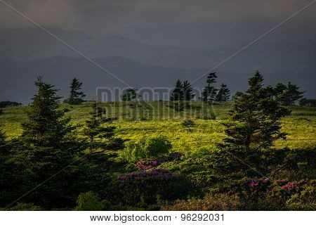 Roan Mountain Spring Rhododenron Blooms 7