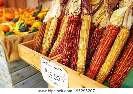 Bunches of indian corn for sale