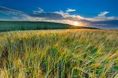 image of grown up  - Sunset over cereal field with grown up ears - JPG